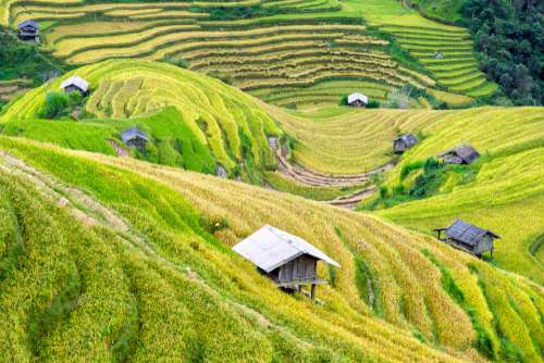 Ruong bac thang vietnam rice paddies agriculture green