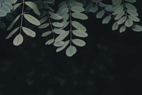 dark green leaf plant tree