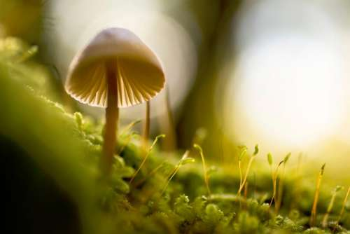nature macro mushroom plants green