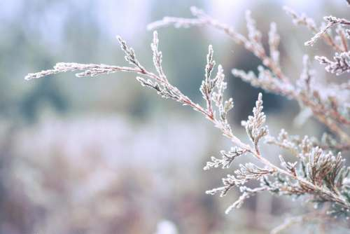 trees branches leaves frost winter