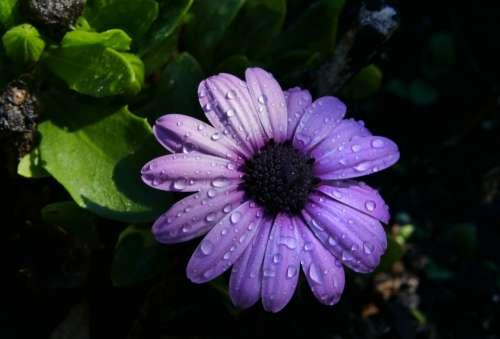 rain flower close up macro plants