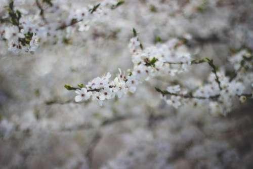 white flower bloom bokeh blur