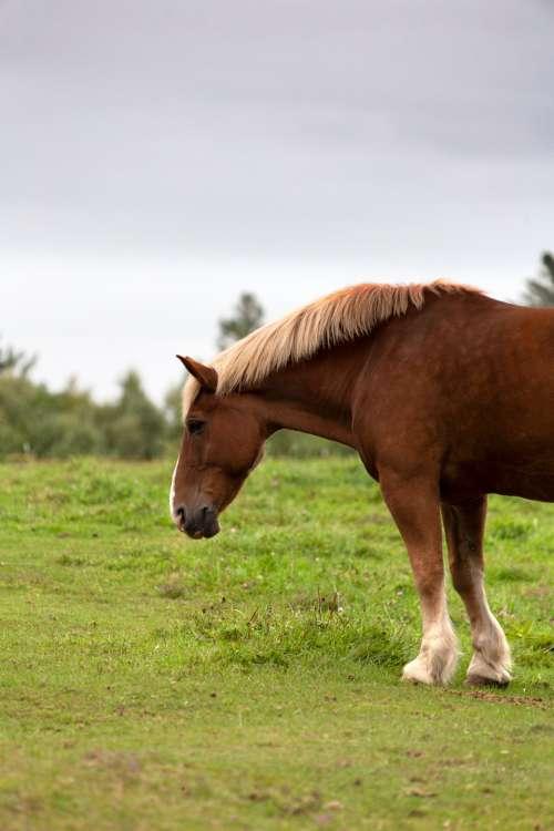 horse animal countryside equine farm