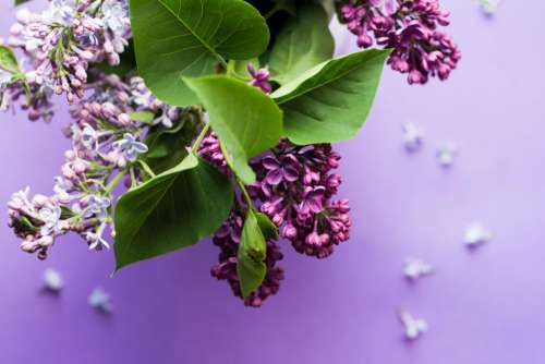 purple flower bloom blossom green