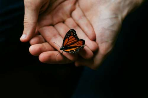 person people hands hold butterfly
