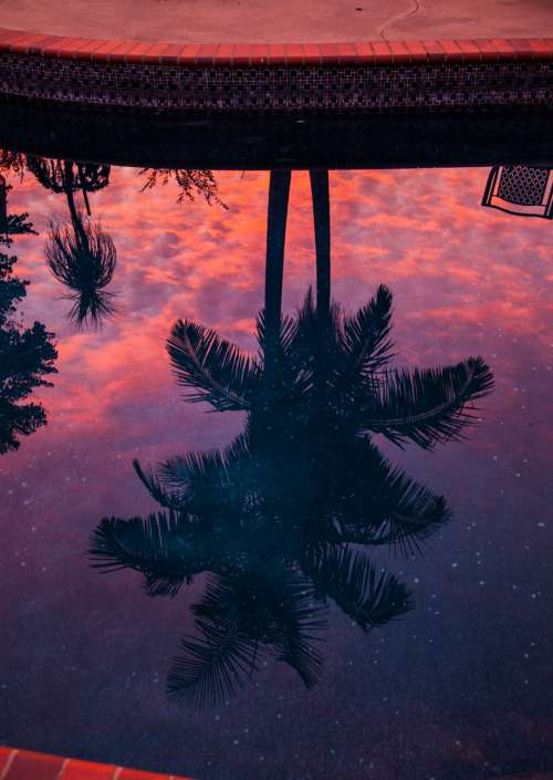 palm tree reflection pool travel red