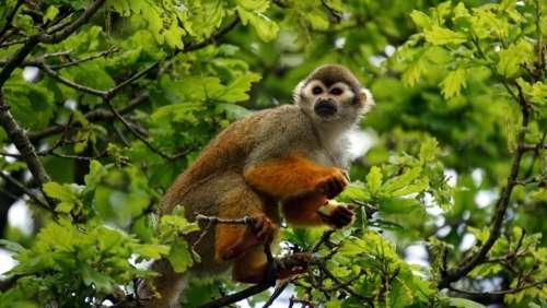 animals mammals monkeys perched trees