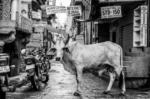 architecture building infrastructure black and white cow