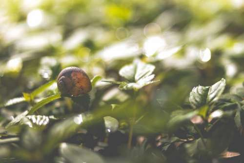 snail garden plant green leaves