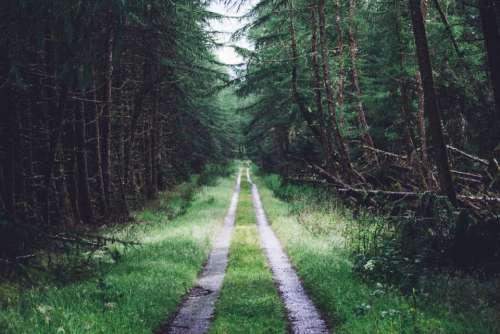 nature outdoor green grass forest