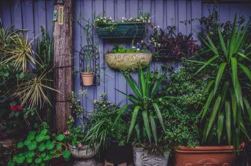 plant garden flower petals green