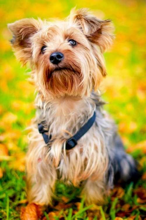 dog animal pet puppy green