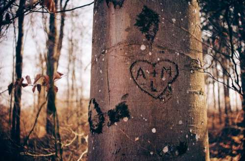 heart love tree embark woods