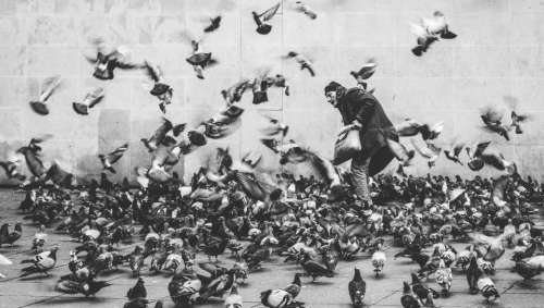 black and white people man dove pigeon
