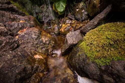stream water green moss leaf