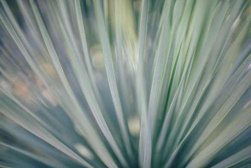 plastic green folds blue lines