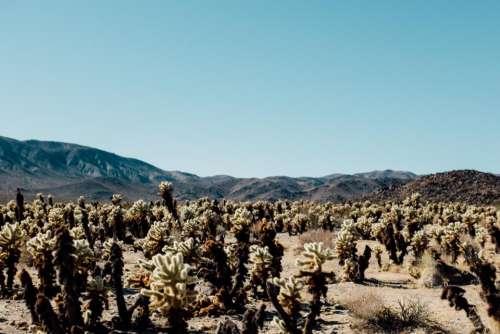 nature landscape mountain desert cactus
