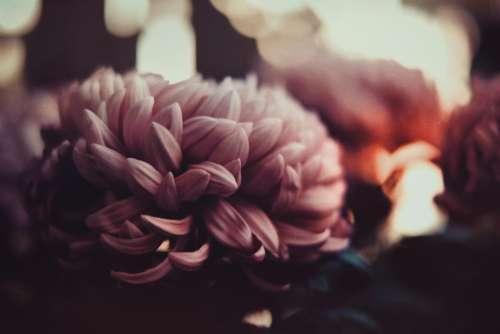 flower bloom nature plant blur