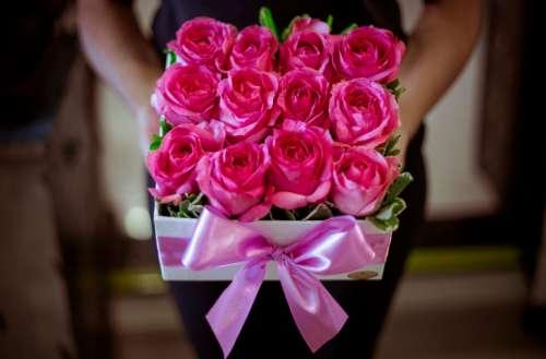 box pink roses flowers romantic
