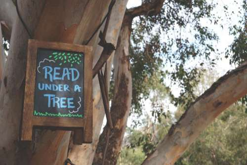 wood tree plant nature sign