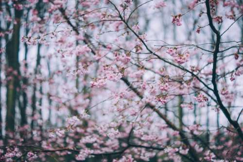 pink blossoms bloom pink flower