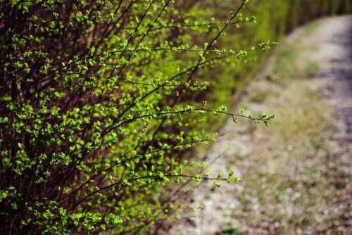 green plants nature outdoor bokeh
