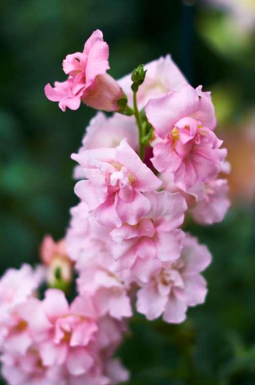 pink flowers macro garden soft