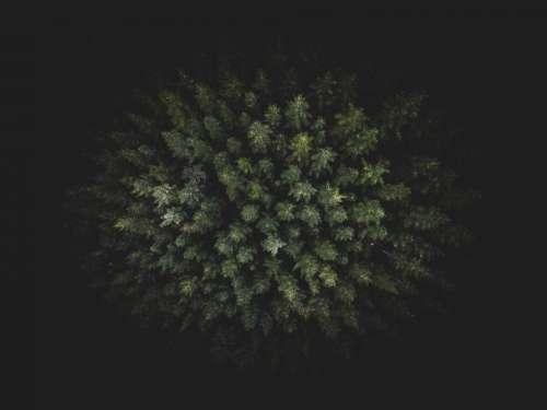 dark green trees plants nature