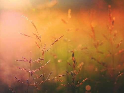 nature grass wheat field autumn