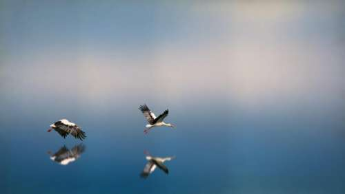 blue sky birds animal flying