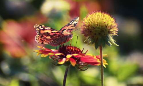 butterfly flower garden nature sunshine