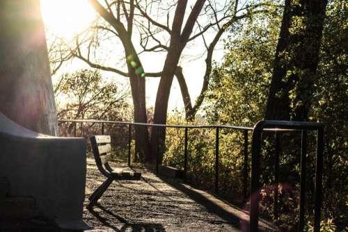 bench sunlight sunny day trees