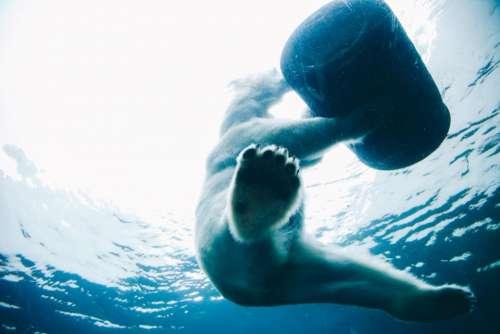 bear wildlife animal water river