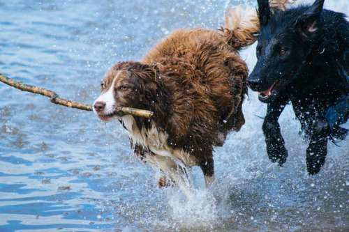 animals dogs running play fetch