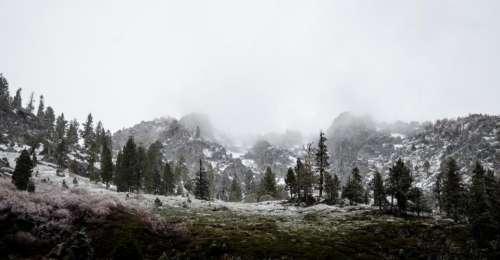 nature landscape forests trees fog