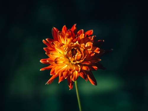 orange flower nature