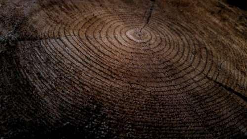 wood logging tree