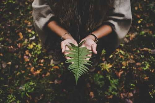 woman holding leave tree nature