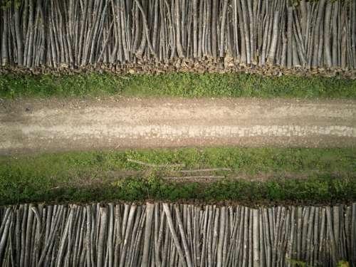 road green grass woods logs