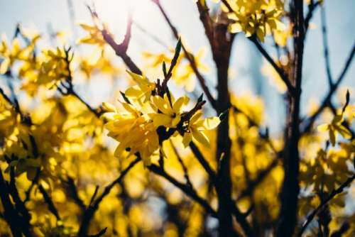 yellow flower trees plant nature