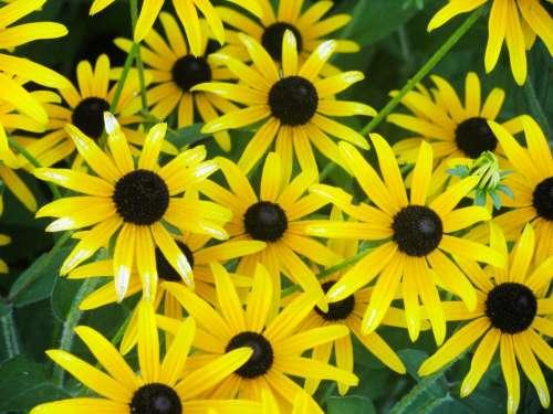 yellow flowers garden nature