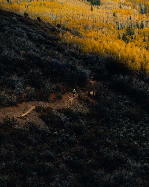nature woods trees black yellow