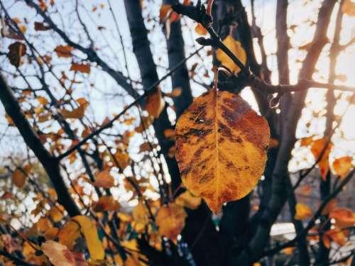 trees leaves nature fall autumn