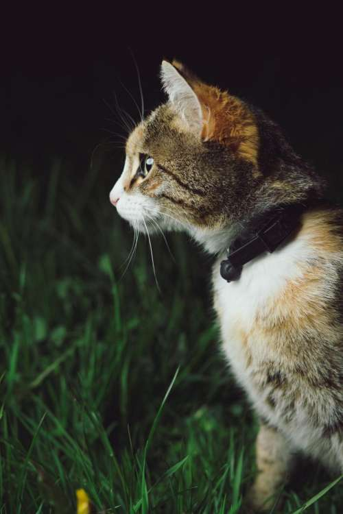cat kitten pet animal blur