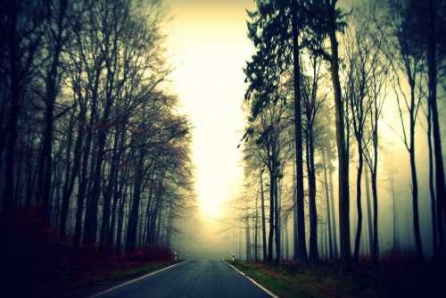road path trees plants nature