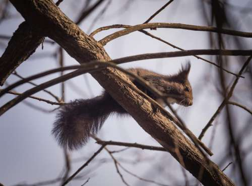 squirrel animal nature trees branch