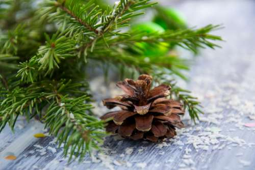 christmas background spruce branch needles green pine cone