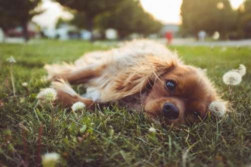dog puppy pet animal playground