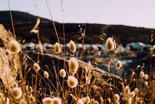 grass outdoor blur coast rock