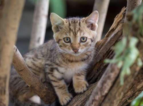 cat kitten animal wood tree